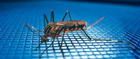 Rollladen, Plissee: Insektenschutzrollo